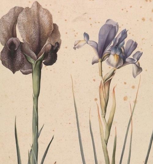 Tania Torrini al Giardino dell'Iris