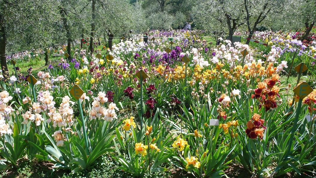 Oggi apre il Giardino dell'Iris – 25 aprile 2019