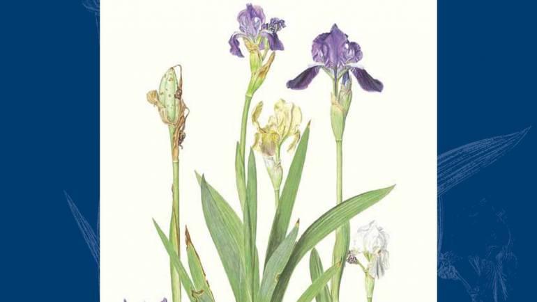 """Il volume """"Iridaceae presenti in Italia"""" ora disponibile in Open Access"""
